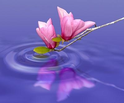 A humildade e a simplicidade geram uma vida muito melhor