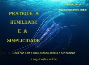simplicidade1